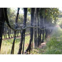 Servizi agro impianti for Irrigazione vigneto